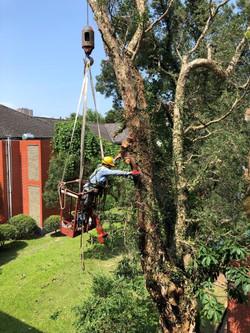 吊掛作業修剪樹木