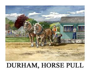 Durham horse.jpg