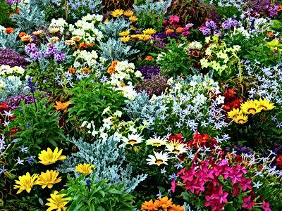 flower-garden-634578.jpg