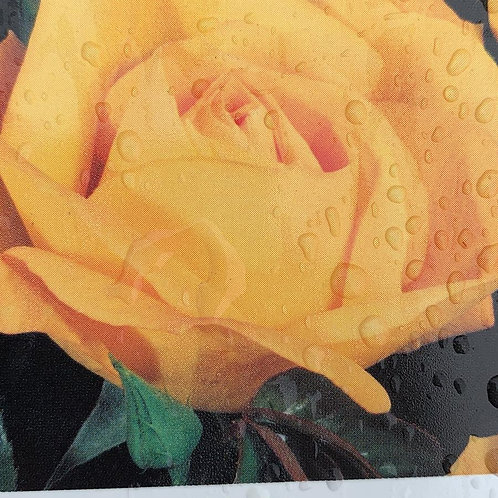 Yellow Climbing Rose
