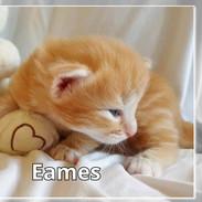 Eames0004.jpg