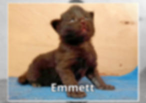 Emmett-0003.jpg