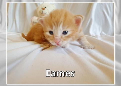Eames0003.jpg