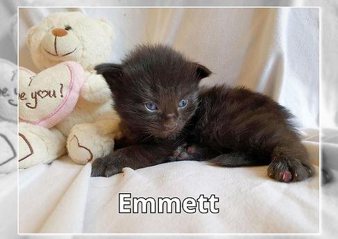 Emmett-0004.jpg