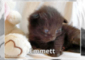Emmett-0005.jpg