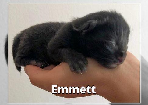 Emmett-0001.jpg