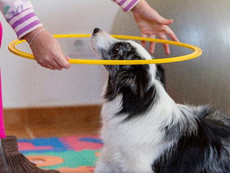 Las intervenciones asistidas con animales y su efecto en la motivación