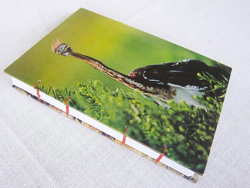bigbirdbook.jpg
