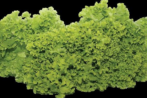 Lettuce (per pound)