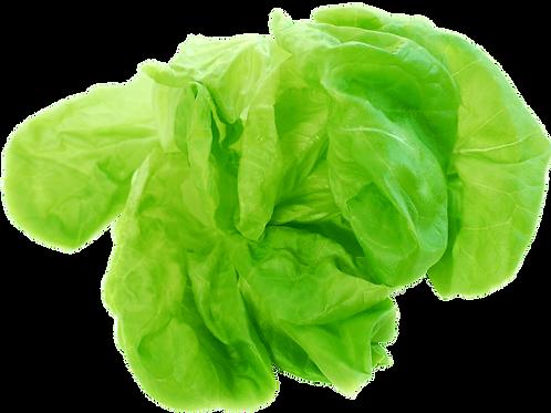 Buttercrunch head lettuce (per head)