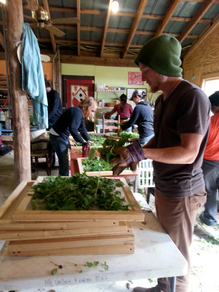 Processing Herbs