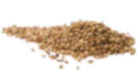 Barley-Malt-3.png