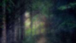 last-light-woods-still.jpg
