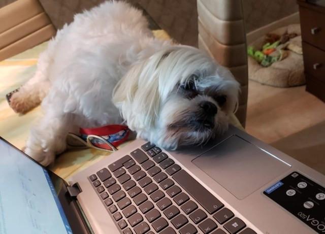 Família trabalha de casa na quarentena, mas também precisa arrumar um tempo para brincar com os cachorros — Foto: Acervo Pessoal/Juliana Gil