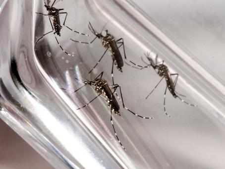 Dengue: DF registra 16,2 mil casos e 8 mortes em 2020