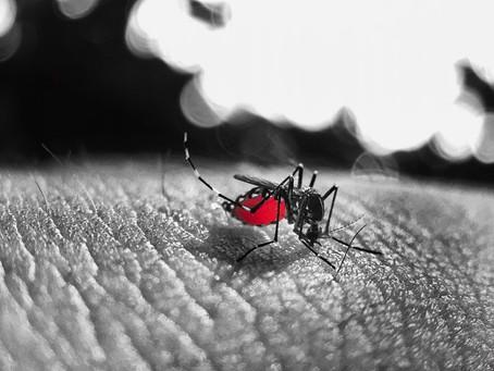 O plano de ação do DF para combater a dengue
