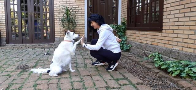 Treinar comandos estimula atividade mental do cachorros e pode ser uma forma de ocupar o tempo nesta quarentena — Foto: Acervo Pessoal/Fernanda Guillen
