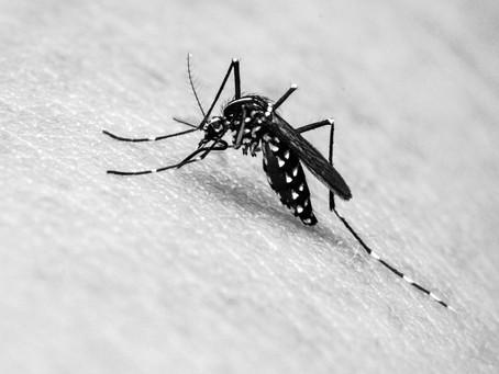 Saúde registra 2 mil novos casos de dengue em três semanas no Paraná