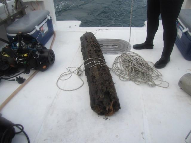 Um tronco da antiga floresta de ciprestes, agora submersa, é recolhido no Golfo do México.