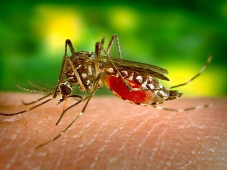 Exame para identificar vírus Zika é comercializado no país