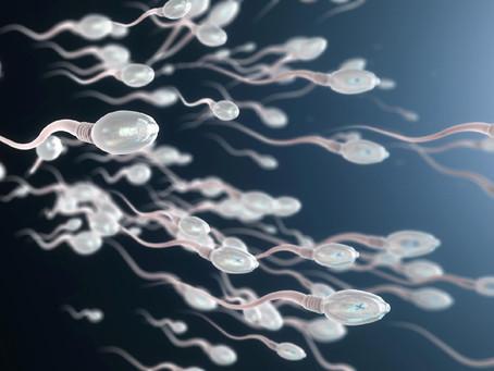 Vacina contra a Covid não altera a qualidade do esperma humano, diz estudo