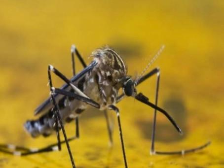 Ministério da Saúde faz alerta para quem não tem vacina da febre amarela