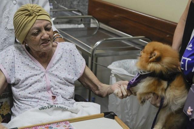 Paciente do Hospital de Apoio, no DF, brinca com cachorro que faz visitas por meio do projeto Pet Amigo — Foto: Geovana Albuquerque/ Secretaria de Saúde do DF