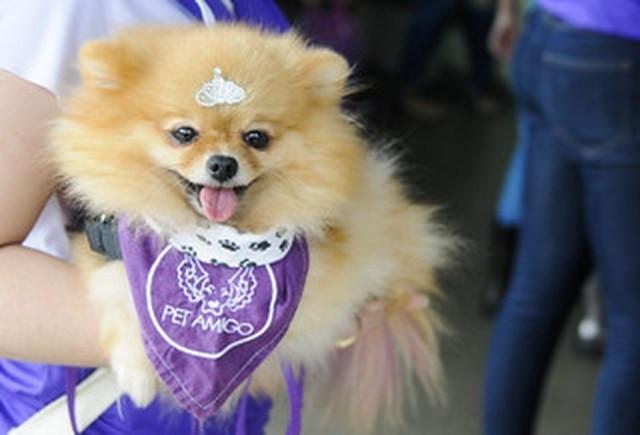 Cachorrinha Channel é uma das pets adestradas para visitar pacientes em hospitais do DF — Foto: Geovana Albuquerque/ Secretaria de Saúde do DF