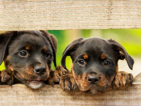 Ter um cachorro faz bem para saúde do coração, diz pesquisa