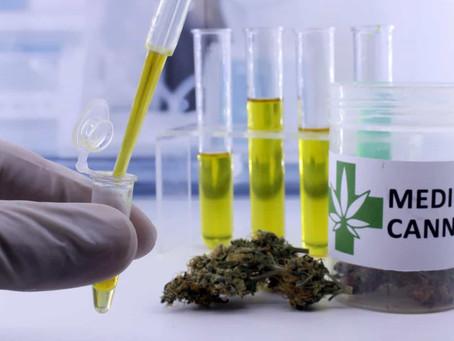 Minicérebro auxilia a testar tipos de cannabis