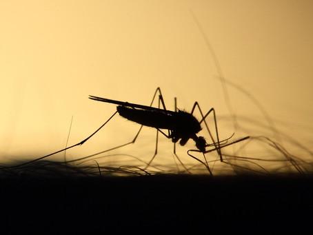 Vacinação contra febre amarela é intensificada na Região Sul