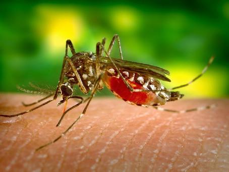 Mais de 12 mil pessoas foram contaminadas por dengue neste ano