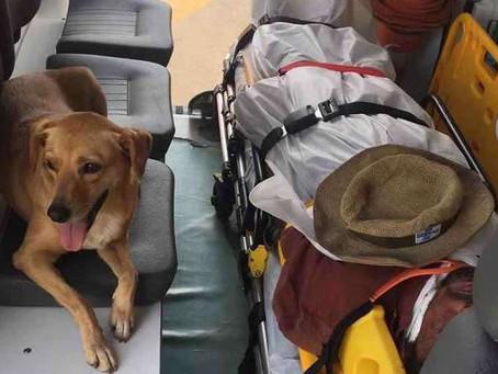 Cadela entra em ambulância e acompanha dono até o hospital no DF