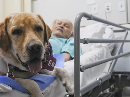 Pets ajudam pacientes com câncer em hospitais públicos do DF