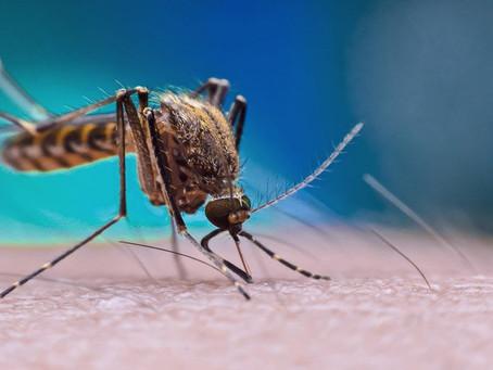 Município do Rio registra 37.973 casos de chikungunya em 2019