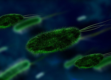 Aumento de bactérias multirresistentes é tema de debate em congresso