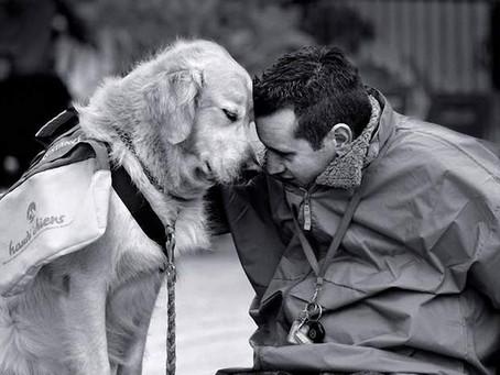 Dor igual: viver o luto dos pets é importante para saúde mental dos donos