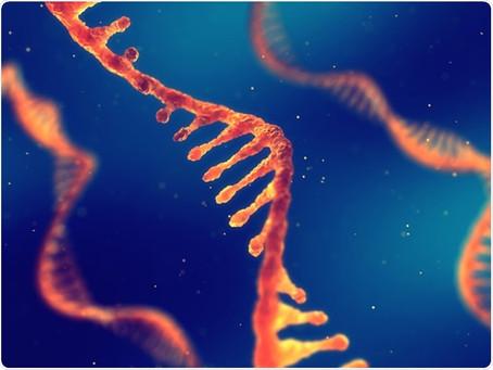 Uma nova forma de tratar doenças graves: vêm aí as terapias de RNA