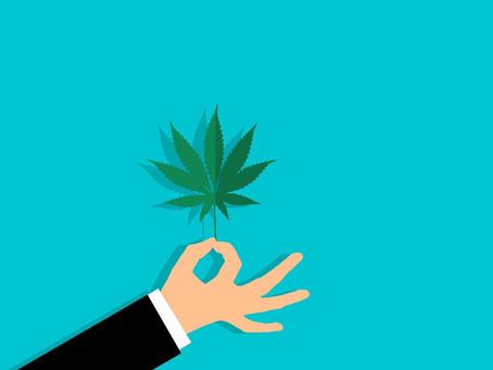 Fabricação e venda de produtos derivados da cannabis entram em vigor