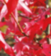 Bildschirmfoto 2019-09-24 um 14.46.54.pn