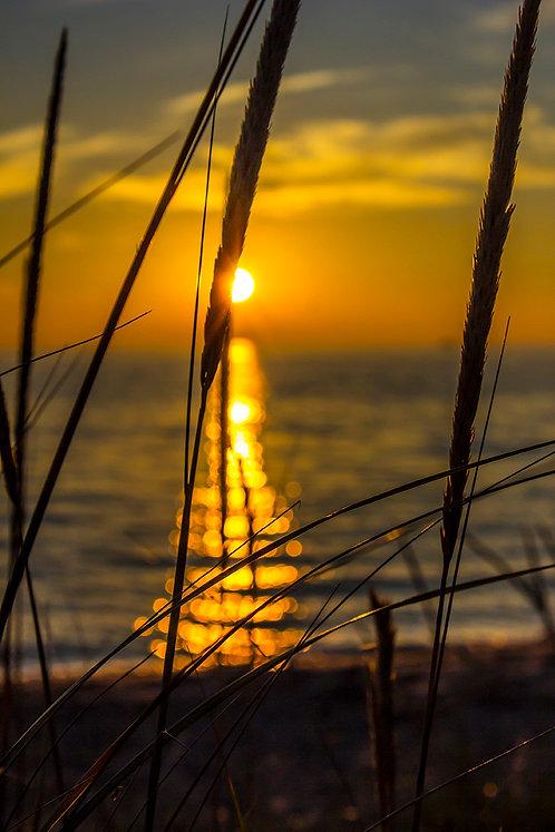 Hoffmaster Sun