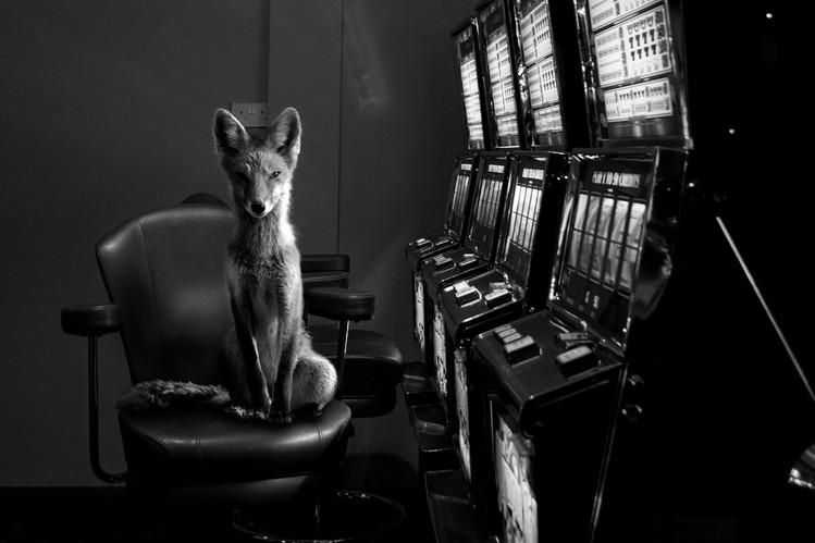 McGroarty_Jason-Totem-Fox---.jpg