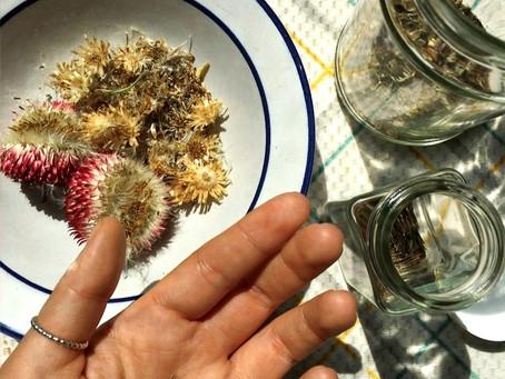 Seed Saving Resources