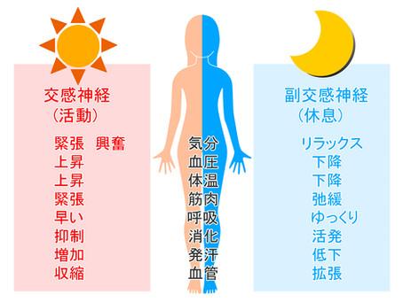 背骨と内臓の関連性