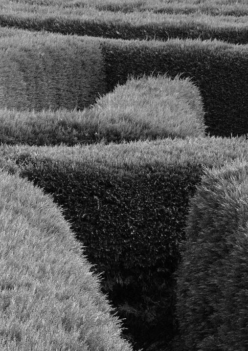 (hedge) Maze