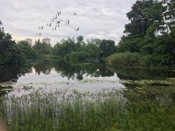 World Heritage Site - Botanical Gardens