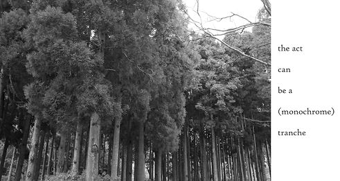 (forest) Forest s.JPG