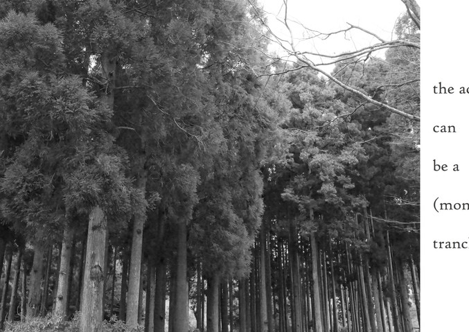 (forest) Forest