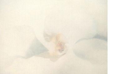 6topazflower01.jpg