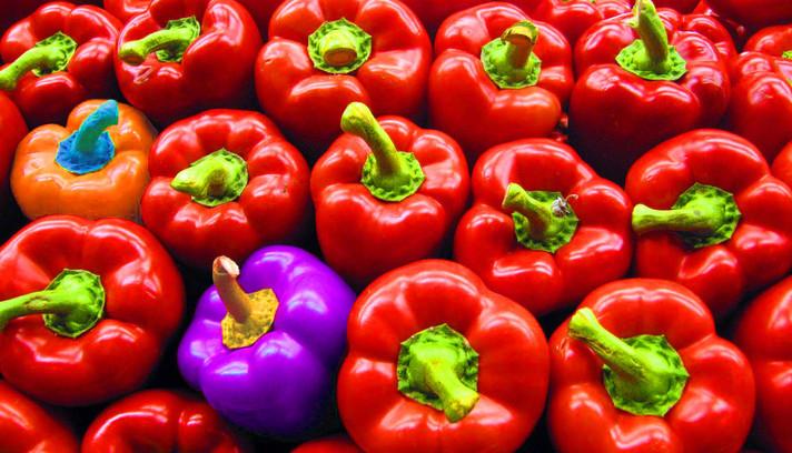 מהם צבעים משלימים ואיך הם יכולים לעזור לנו במיתוג העסק